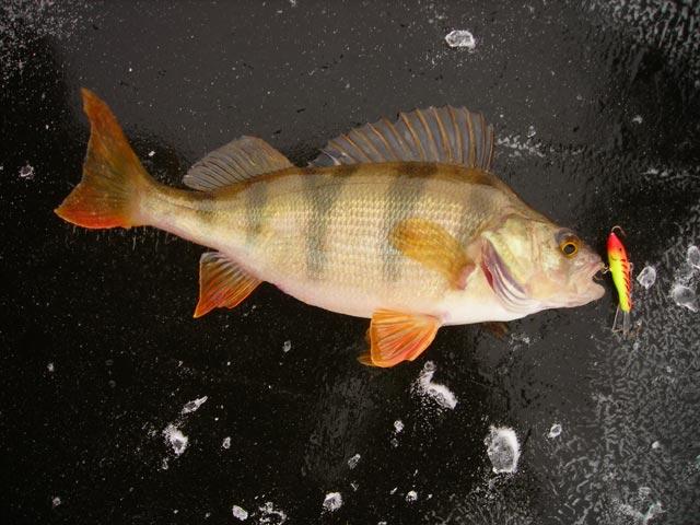 разрешение на ловлю рыбы в псковской области